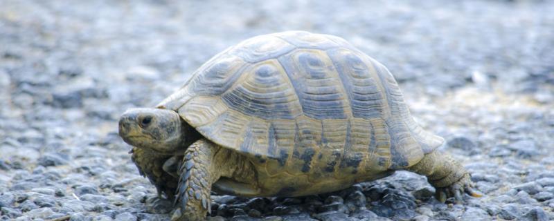 家养乌龟需要什么环境,养龟要注意什么