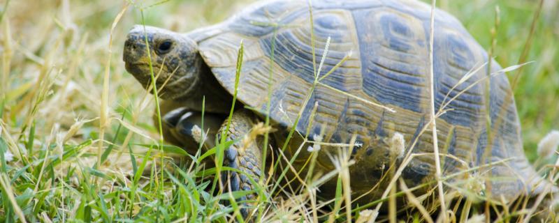 新手养龟几厘米的好,新手如何养龟
