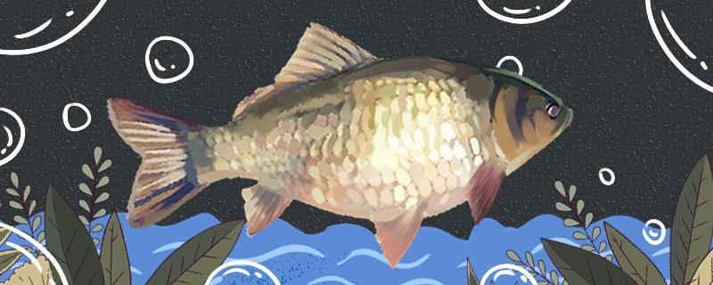 钓鲫鱼时会有小鱼闹窝吗,小鱼闹窝的最有效的方法是什么