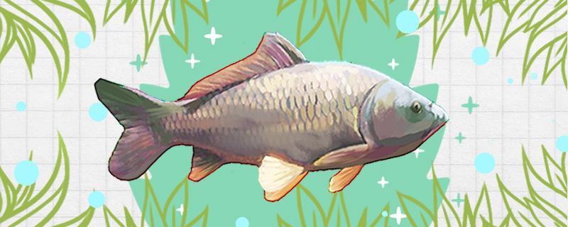 钓四五斤的鲤鱼用多大钩,用多大线