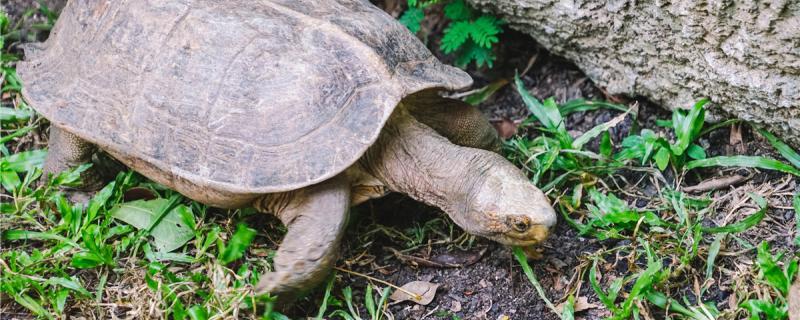 深水龟需要晒背吗,晒背有什么用