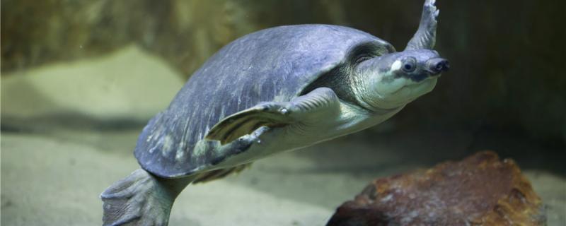 什么龟是深水龟,哪些龟适合深水养