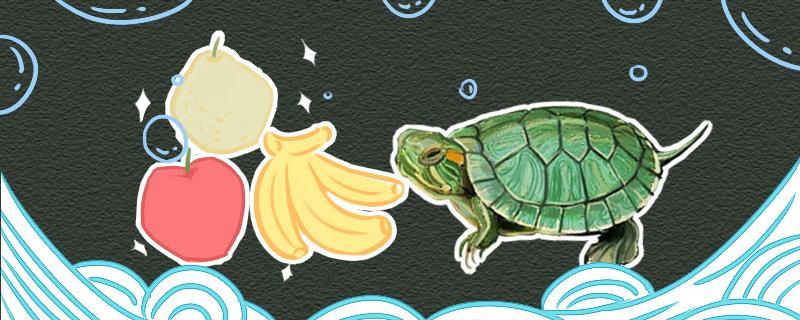 巴西龟一定有红耳朵吗,还有什么特点