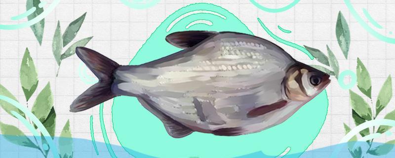 江河流水中能钓鳊鱼吗,如何钓