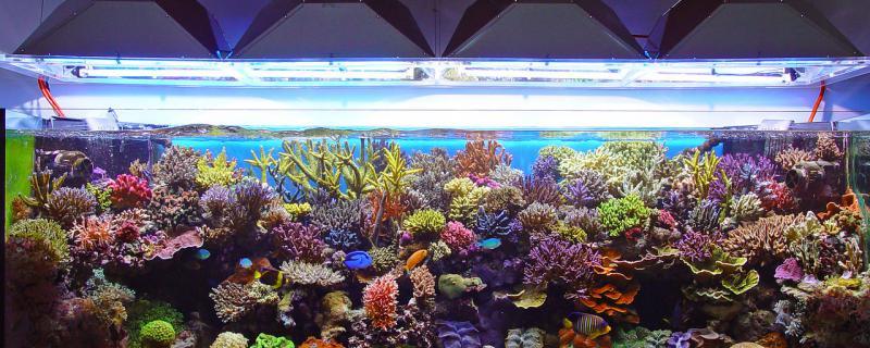 海缸喂丰年虾会坏水吗,如何防止坏水