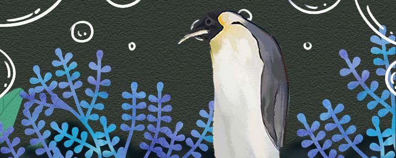 企鹅会冬眠吗,会爬树吗