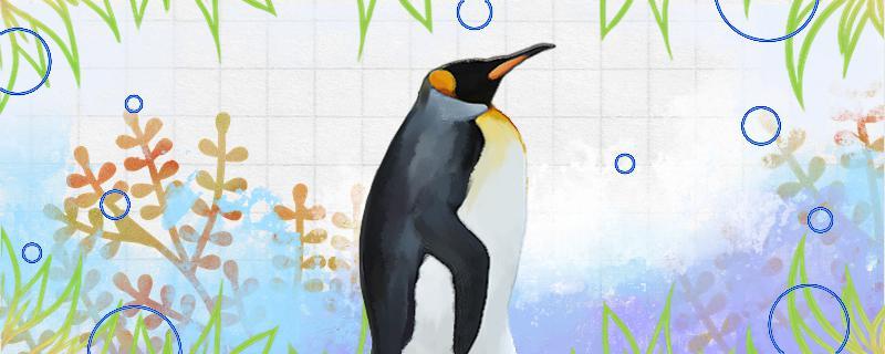 企鹅会被冻死吗,会被淹死吗