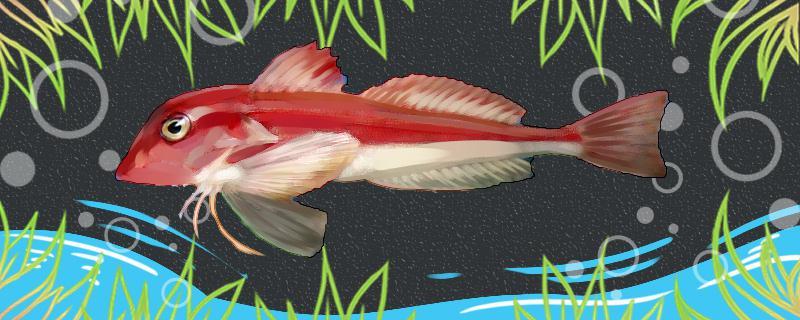 红娘鱼有毒吗,有寄生虫吗