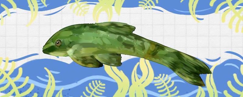 绿巨人小精灵鱼好养吗,怎么养