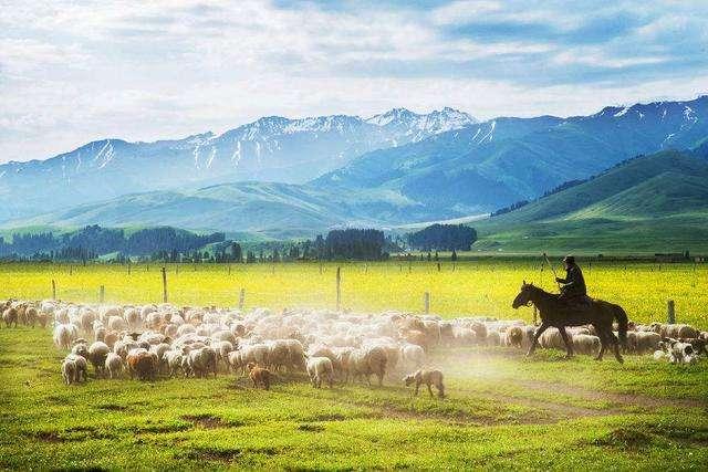 可可托海的牧羊人歌曲背后的故事,一个关于牧羊人和养蜂女的故事!